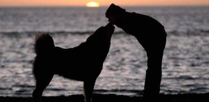 amore-cane-800x390.jpg