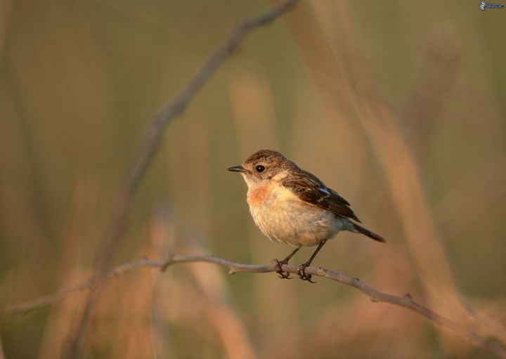 uccellino-sul-ramo-225071.jpg